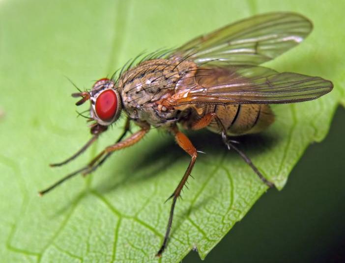 средства для борьбы с капустной мухой
