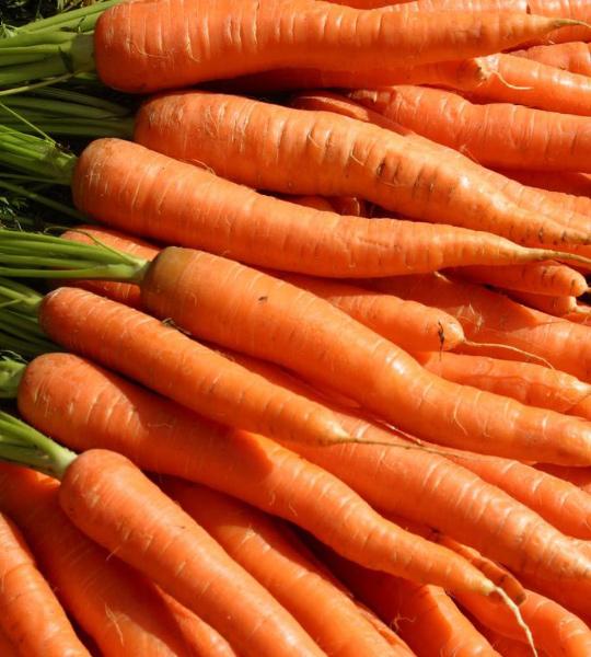 лучшая морковь для хранения