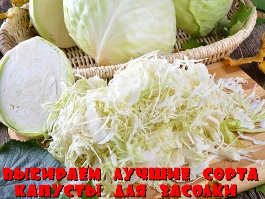 Выбираем лучшие сорта капусты для засолки