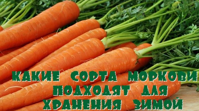 Какие сорта моркови подходят для хранения зимой