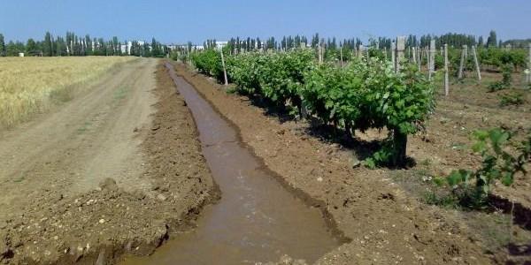 как правильно поливать виноград в течении весны и лета