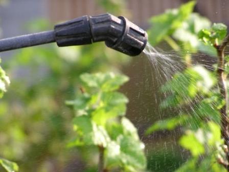 как часто поливать виноград