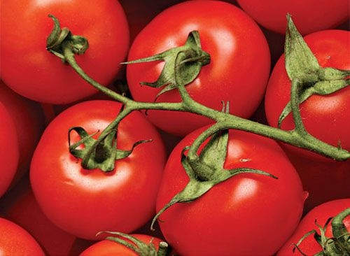 помидоры дар заволжья