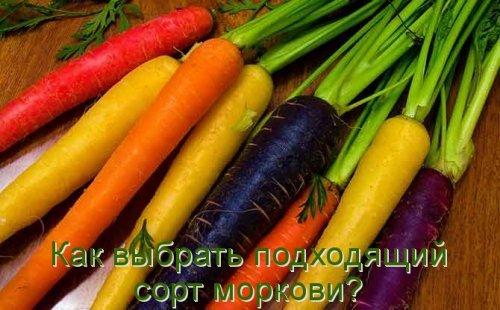 Как выбрать подходящий сорт моркови