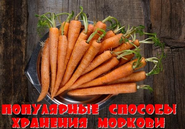 Популярные способы хранения моркови