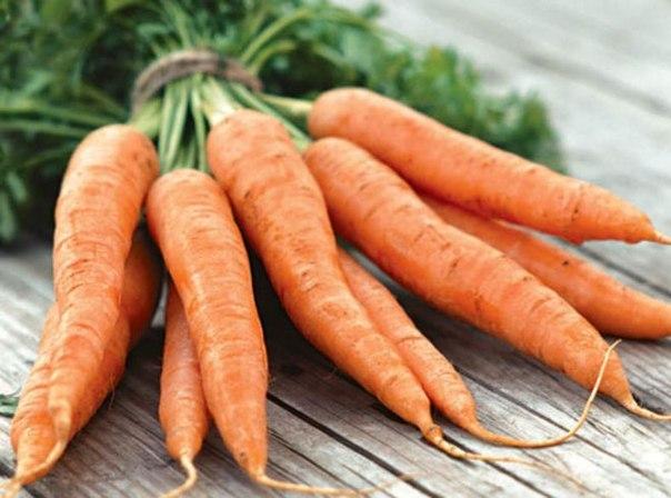 морковь амстердамская описание