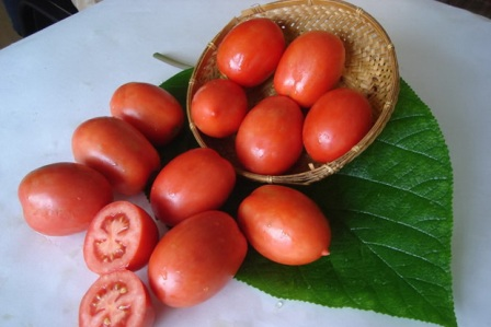 помидоры сорта Ракета