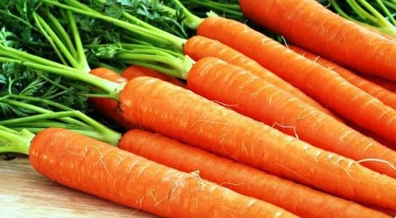 сорт моркови амстердамская