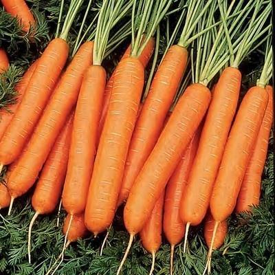 морковь сорт нантская