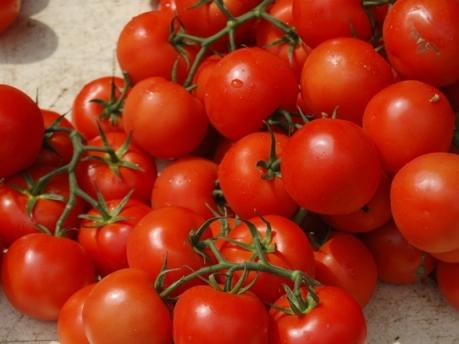 помидоры сорта верлиока