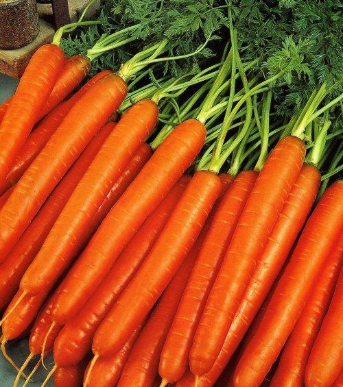 морковь нантская когда сажать