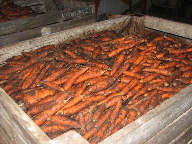 хранение моркови на зиму в подвале