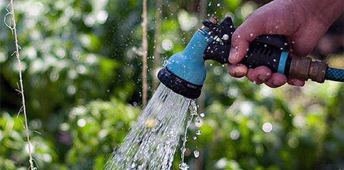 как часто поливать баклажаны