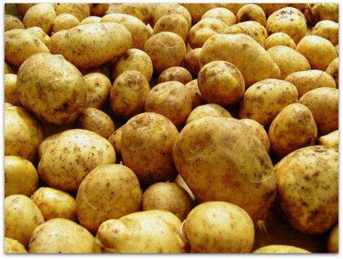 ранний сорт картофеля гала