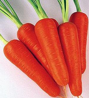 морковь шантане характеристика