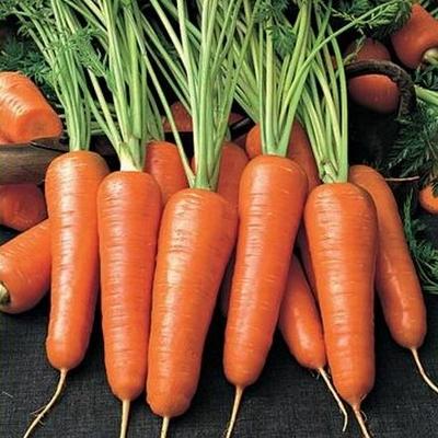 сорта моркови для теплицы