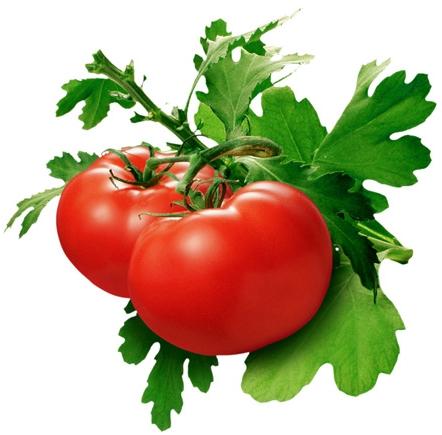 помидоры ямал