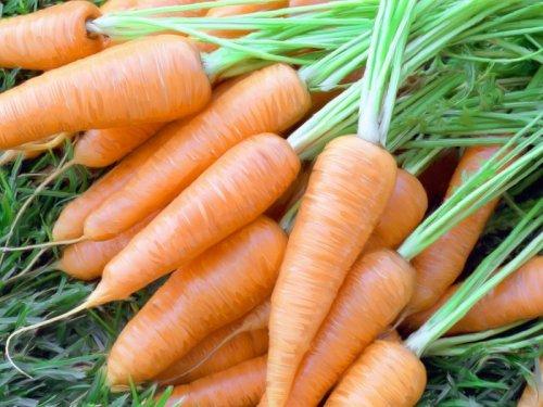 морковь подкормки уход