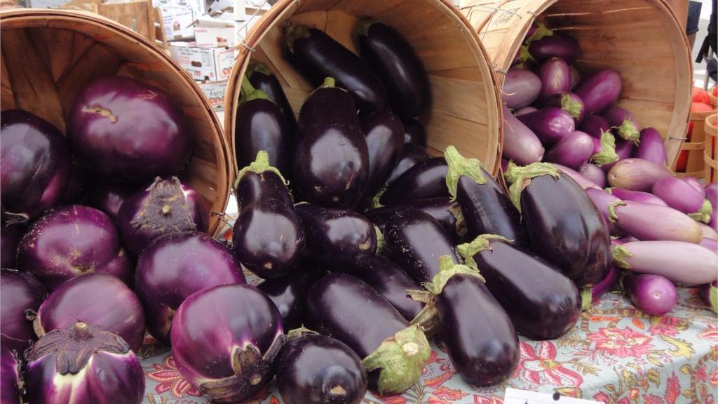выращивание баклажанов в сибири