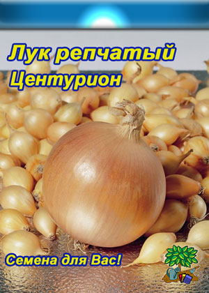 семена лука центурион