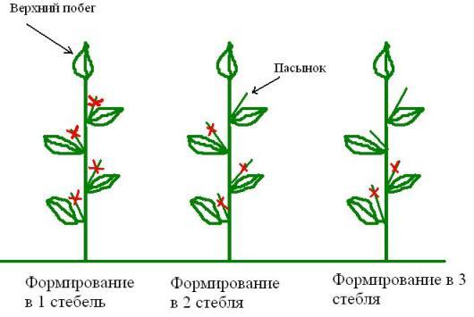 схемы формирования баклажана