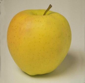 Яблоко сорта Голден Делишес