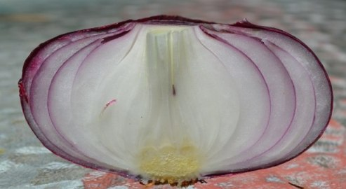 срез ялтинского лука