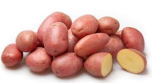 картофель беллароза характеристика