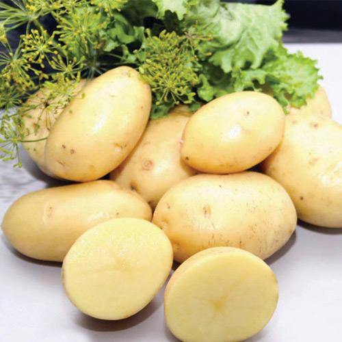 картофель импала описание