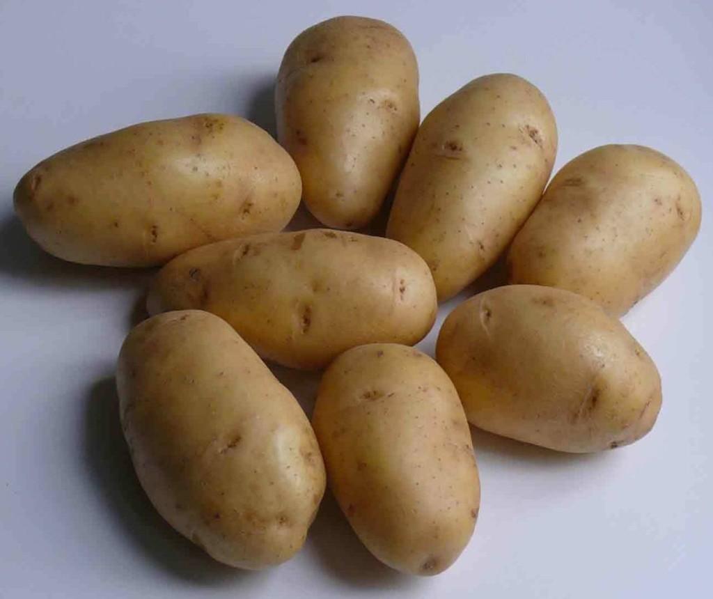 картофель сорта невский характеристика сорта