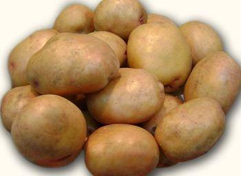 картофель жуковский характеристика