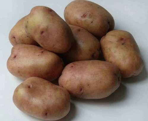 сорт картофеля жуковский ранний