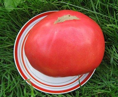 томат король гигантов