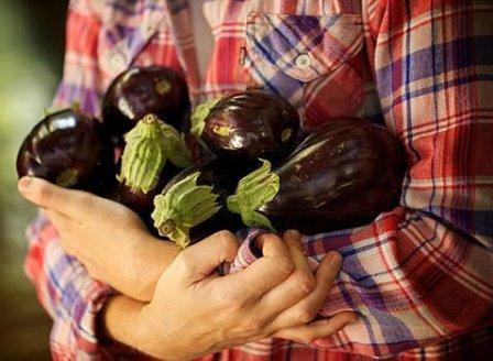 урожай баклажанов после подкормки