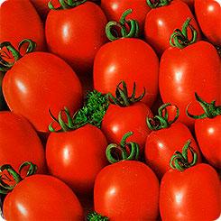 томат ежик