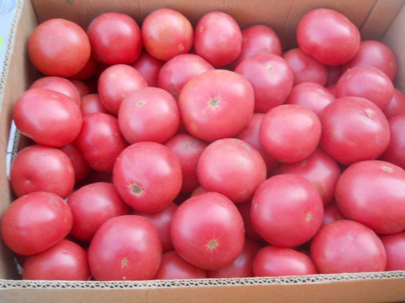 томат фламинго