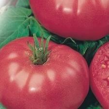 сорт помидор розовый гигант