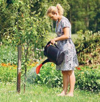 полив яблони мельба