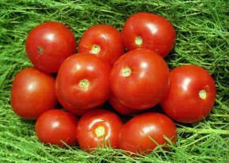 сорта томатов волгоградский