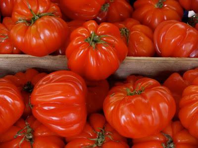 томаты сорта пузата хата
