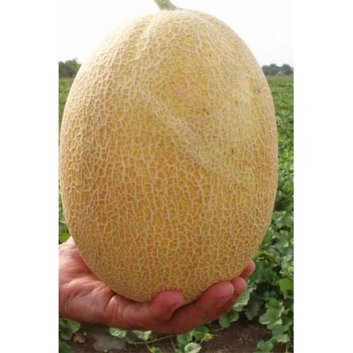 Дыня свит ананас