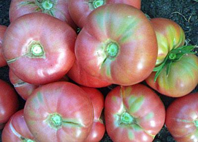 помидоры микадо уход