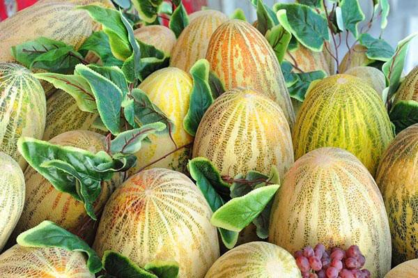 Дыня ананасная выращивание