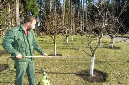 лечение цитоспорза яблок
