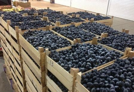 виноград молдова урожай