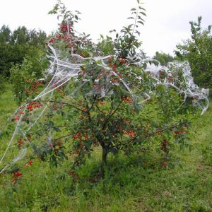 коккомикоз вишни профилактика