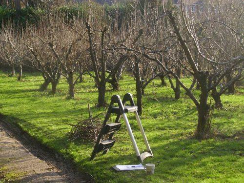 как обрезать старую яблонь