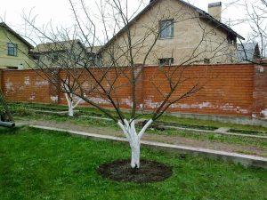 обрезка старой яблони