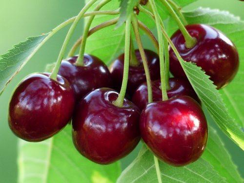 пересадка вишни