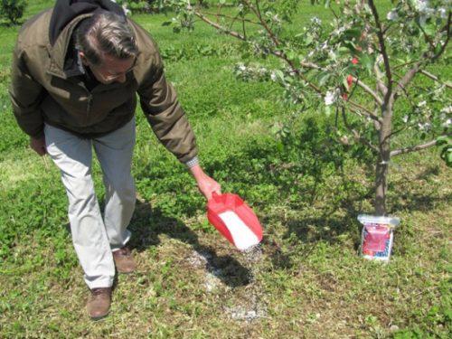зачем нужна подкормка яблонь